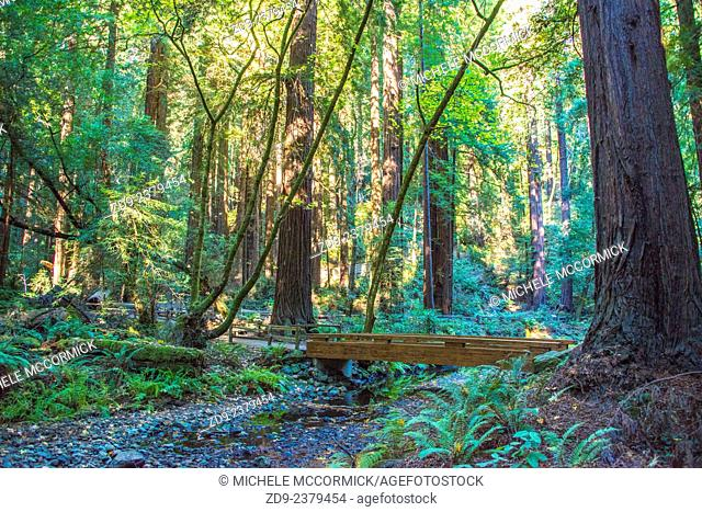Northern California's Muir Woods offers wonderful woodland walks among beautiful sequoia trees