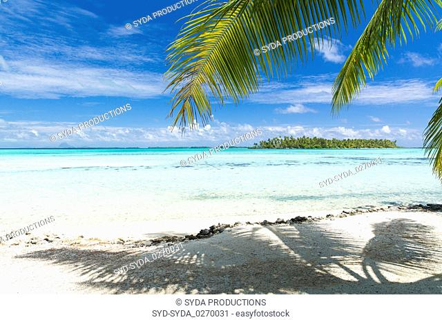 tropical beach with palm tree in french polynesia