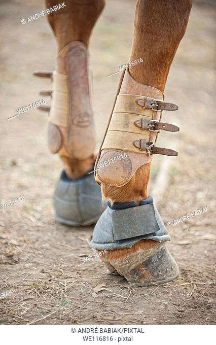 Lower section of horse legs supported by sport boots protectors