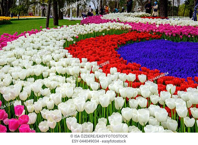 Traditional Tulip Festival in Emirgan Park, a historical urban park located in Sariyer district. Tourists and locals visit and spend time