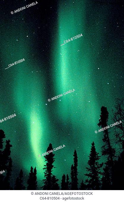 Aurora Borealis or Nothern Lights, Denali, Alaska, USA