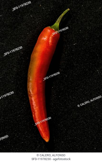 A Filomena chilli pepper