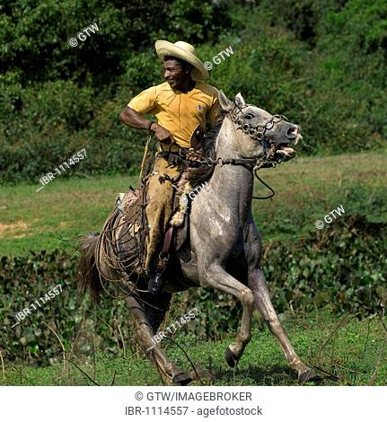 Pantanal cowboy galloping through the prairie, Pantanal, Brazil