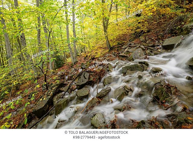 Stream in the forest of Gabardito, Hecho valley, western valleys, Pyrenean mountain range, province of Huesca, Aragon, Spain