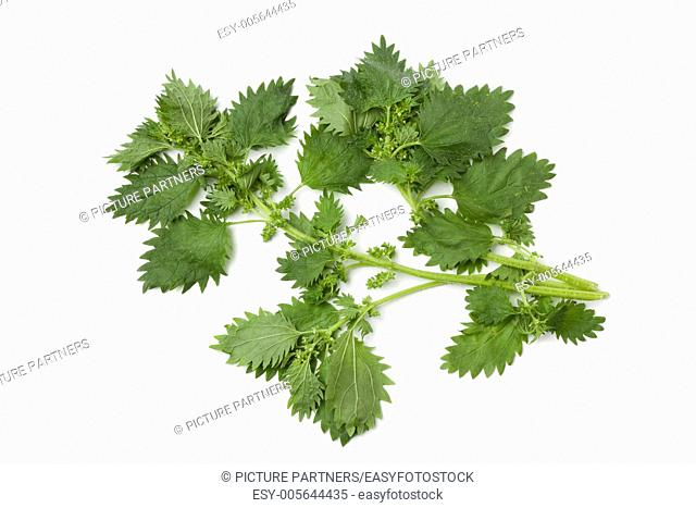 Twigs of nettles on white background