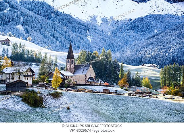 Autumn scenic outdoor, foliage and green hills with snowy trees, Funes Valley, Dolomites Alps, Trentino Alto Adige, Italy.