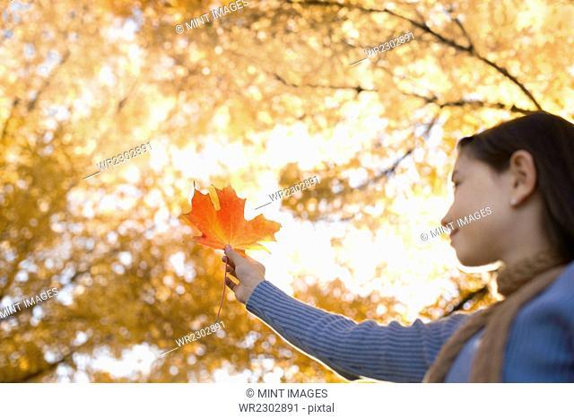 A girl holding up a large orange autumn coloured maple leaf