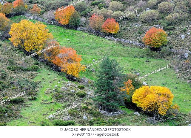 Gredos mountains in autumn. Ávila province. Castilla y León. Spain