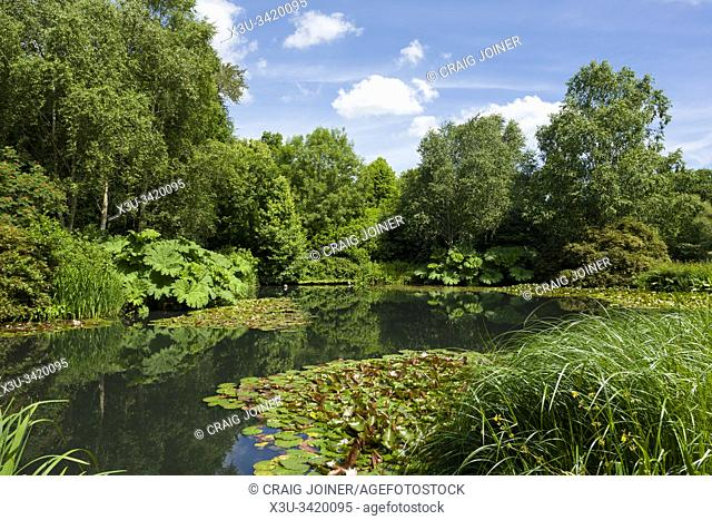 The lake at RHS Rosemoor garden in summer near Great Torrington, Devon, England