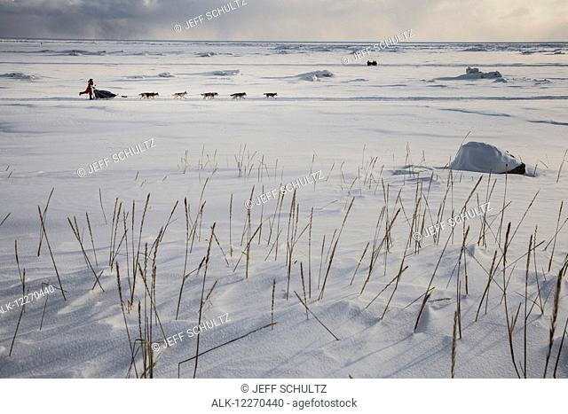 Lisbet Norris a few miles from the finish line along the Bering Sea Coast nears Nome during the 2014 Iditarod Sled Dog Race