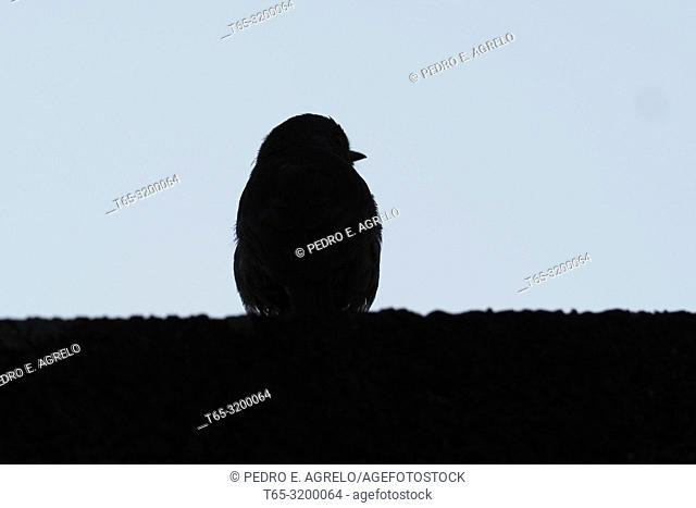 Shadow of a sparrow on a wall in a village of galicia in the province of Lugo