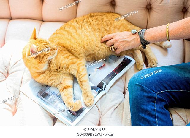 Mature woman sitting on sofa petting ginger cat, cropped