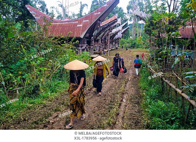 Toraja funeral ceremony  Tana Toraja  Sulawesi  Celebes Island  Indonesia