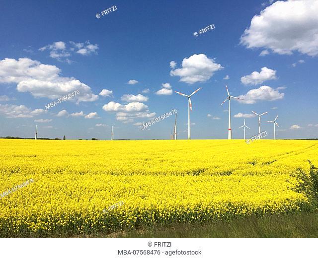 Flowering rapeseed field, Brandenburg, Germany, wind turbines