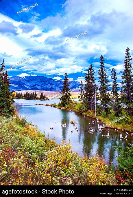 Rocky Mountains, Canada. Shallow-water lakes, picturesque firs and distant mountains. Lush clouds are reflected in the smooth water