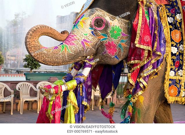 Jaipur, Rajasthan,India - March 29 : people and elephants of the city are celebrating the gangaur festival one of the most important of the year march 29 2009...