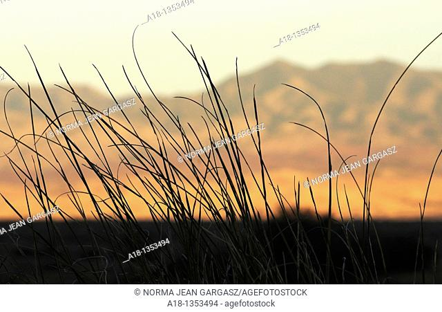 Grasslands cover the foothills of the Santa Rita Mountains north of Sonoita, Arizona, USA, in the Sonoran Desert