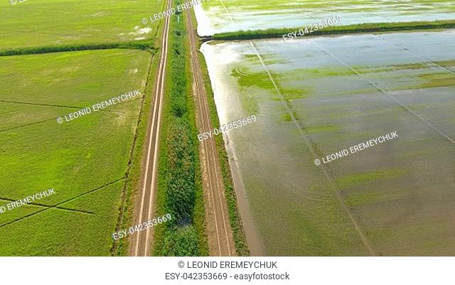 Growing rice on flooded fields. Ripe rice in the field, the beginning of harvesting. A birds-eye view. Flooded rice paddies