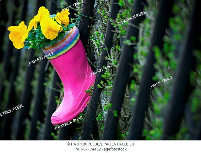 A child's wellington boot, planted with pansies, hangs from a garden fence in Straupitz, Germany, 1 April 2015. Photo: Patrick Pleul/dpa | usage worldwide