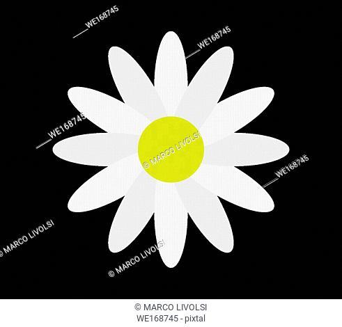 flower daisy icon