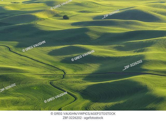 Palouse wheat fields from Steptoe Butte, Washington