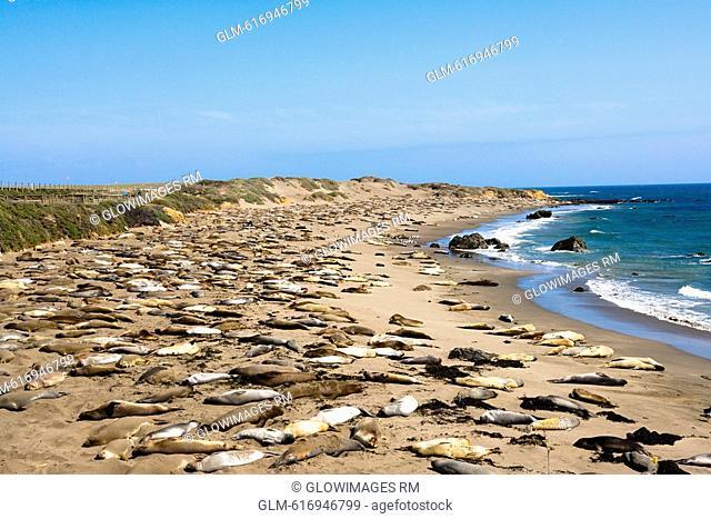 Sea lions resting at the coast, California, USA