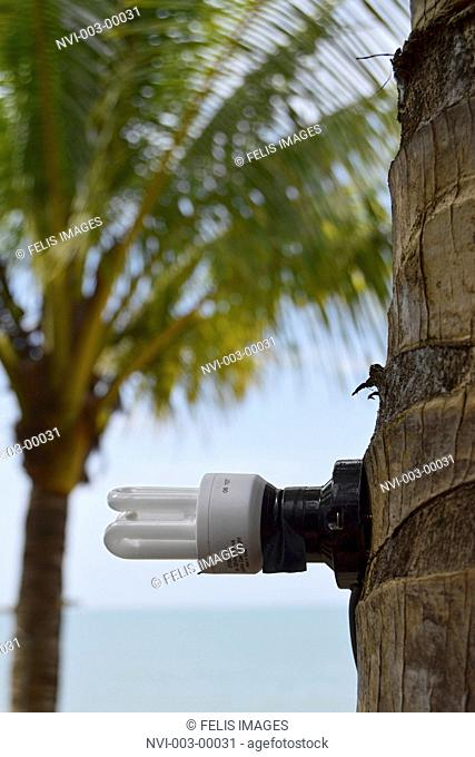 Energy saving lamp, screwed on palm tree, Koh Kho Khao Iceland, Southern Thailand, Thailand, Southeast Asia