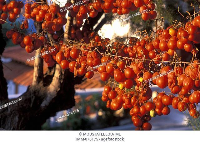 Crete, Lassithi Sundried tomatoes