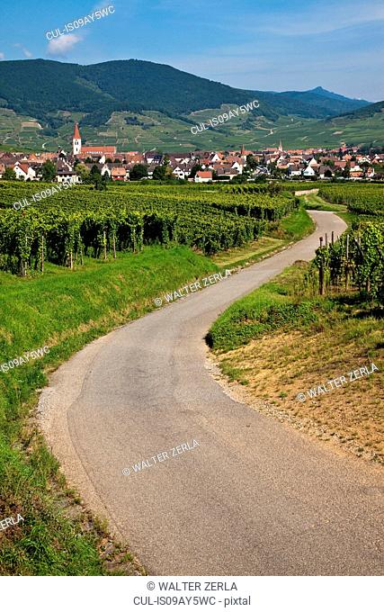 Landscape with winding road through vineyards, Alsace, Lorraine, France