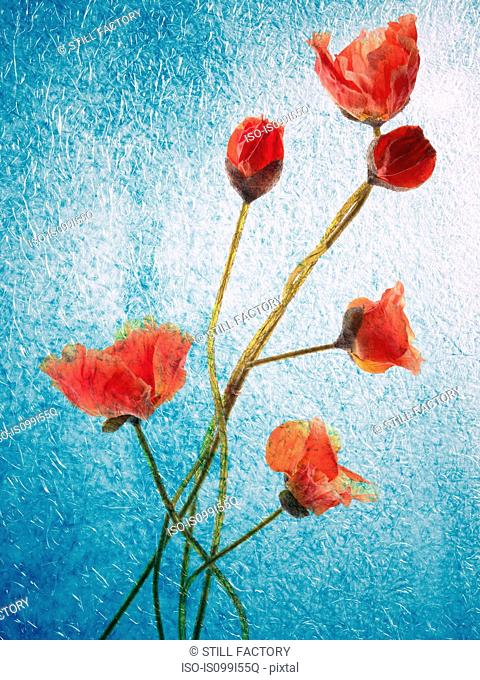 Still life of red flowers
