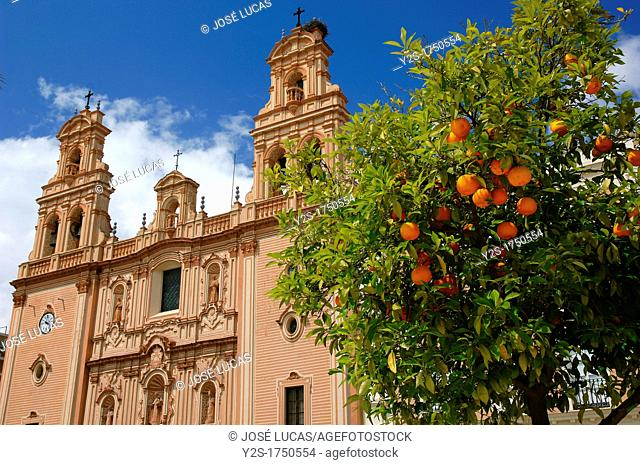 Cathedral of La Merced and orange tree, Huelva, Spain