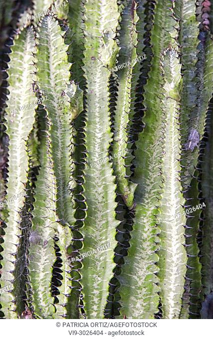Long Cactus