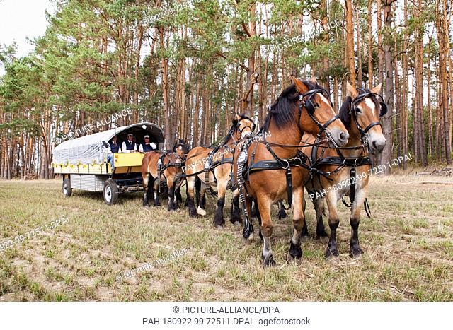 22 September 2018, Saxony-Anhalt, Reuden: The chariot of the Interessengemeinschaft Zugpferd e.V. (IGZ) at the German wood-cutting championships in Reuden