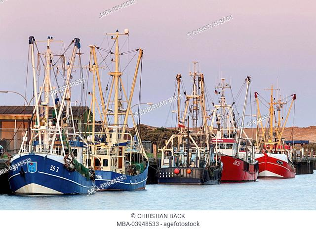 Crab cutters in the harbour, Büsum, Ditmarsh, Schleswig - Holstein, North Germany, Germany