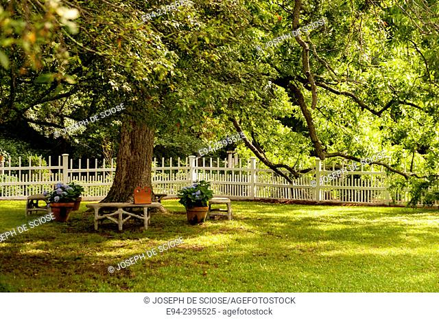 A white picket fence and arbor gate with a path, boxwoods and a large pecan tree.Georgia USA