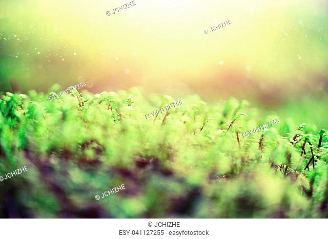 Abstract natural background with light bokeh and leaks effect. Grass in forest. Summer concept. Copy space. Banner. Soft focus