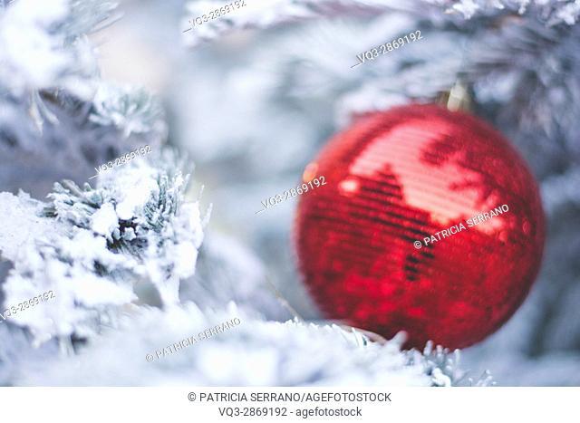 Christmas ball on a snowy tree, colmar france