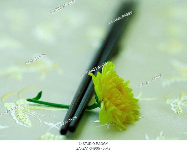 Close-up of a pair of chopsticks and a Chrysanthemum flower