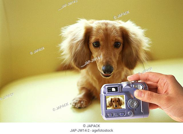 Taking a photo of a dog with a digital camera, composite image