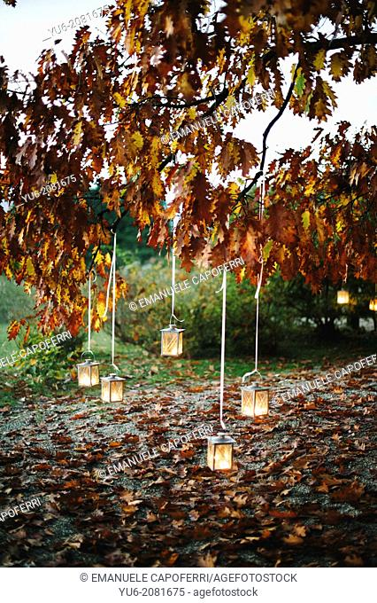 Lighted lanterns hanging from the branches of an oak tree in autumn