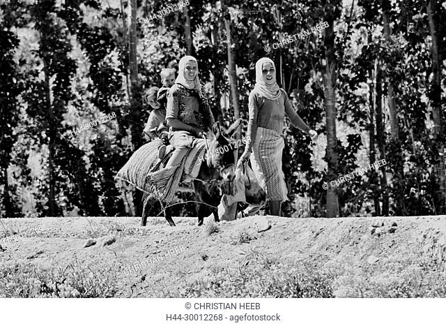 North Africa, Africa, African, Morocco, Moroccan, local women on donkey, North Africa, Africa, African