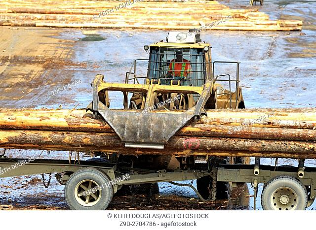 Loader unoading logging truck at sawmil, Ladysmith, Vancouver Island, British Columbia