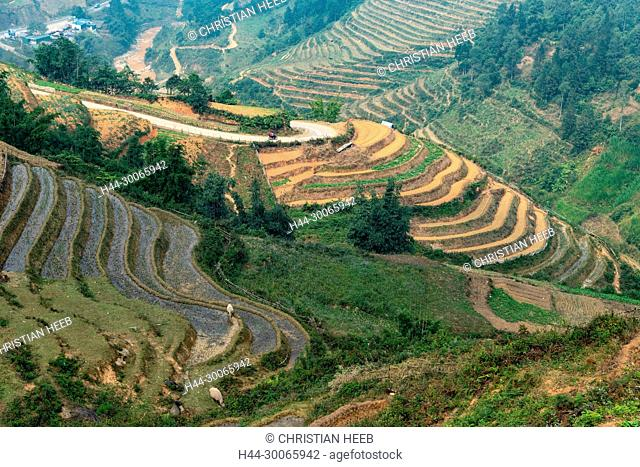 Asia, Asien, Southeast Asia, Vietnam, Northern, Hoang Lien Son Mountains, Sa Pa, Sapa, terraces