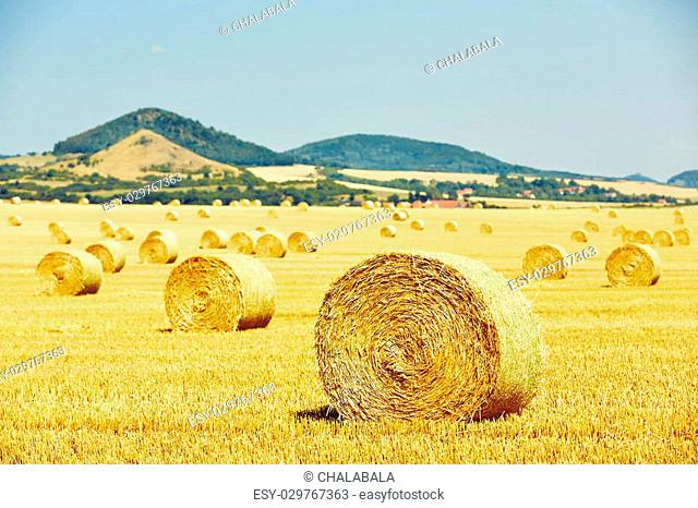 Straw bales on the field after harvest