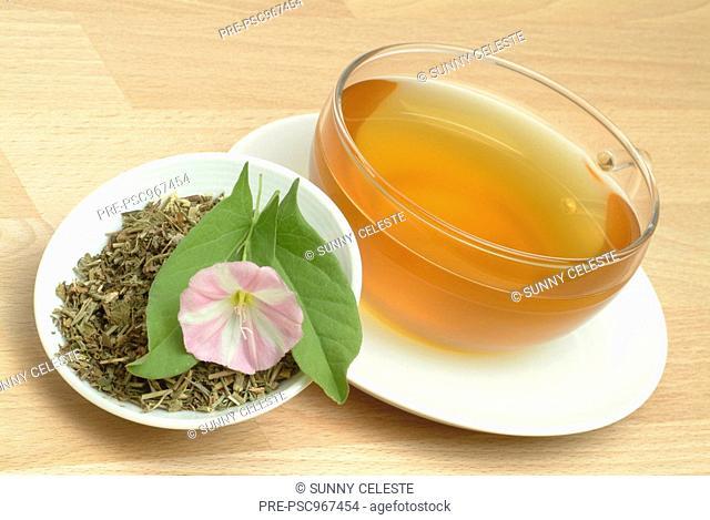 tea made of Blindweed, blindweedtea, medicinal tea, herbtea, Convolvulus arvensis, Vilucchio comune, te