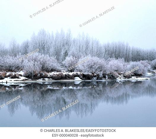 Hoar frost on trees along bank of the Deschutes river. Deschutes National Forest, Deschutes county, Oregon. USA