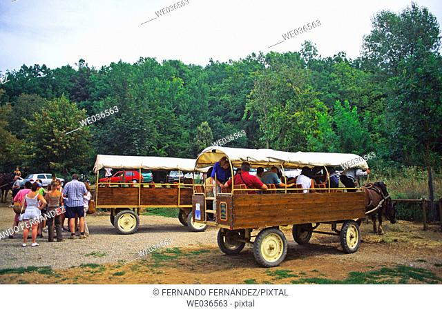 Carriage for touristic visits. Garrotxa Natural Park. Girona province. Catalunya. Spain