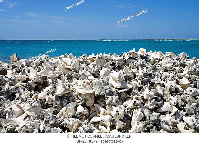 Pile of Queen Conch (Strombus gigas) shells, a local delicacy, Lac Baai in the south of Bonaire, Lesser Antilles, former Netherlands Antilles, Caribbean sea