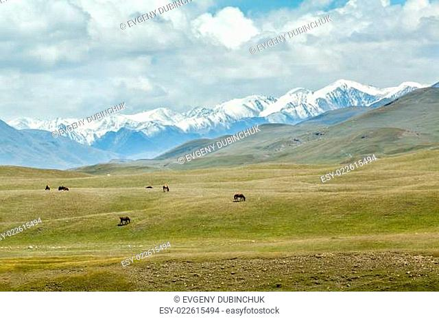 Group of horses in high snowy mountains