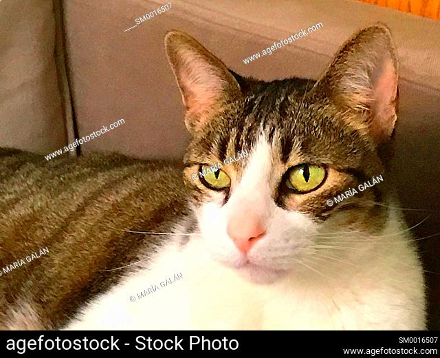 Portrait of tabby and white cat